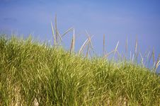 Grassy Dune Stock Photo