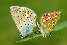 Free Butterfly Royalty Free Stock Photography - 6123077