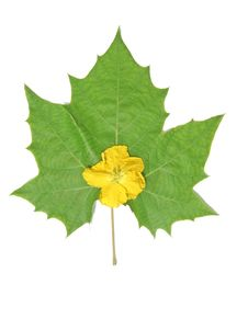 Free Green Leaf And Yellow Flower Stock Photos - 6123543