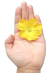 Free Yellow Flower In Hand Royalty Free Stock Image - 6123746