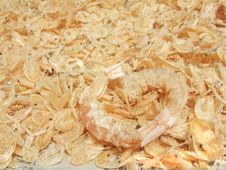 Free Dried Shrimp Royalty Free Stock Images - 6124139