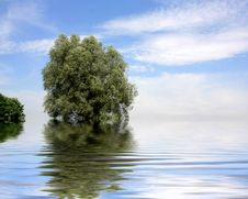 Free Tree In Water Stock Photo - 6124460