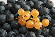 Free Black And Golden Currant Stock Photos - 6124953