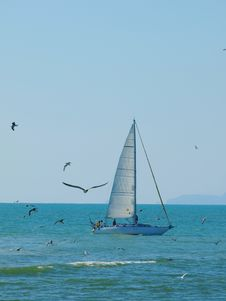 Free Sailing Boat And Seagulls Royalty Free Stock Images - 6125389