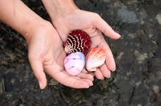 Free Shell In Hands Royalty Free Stock Photo - 6126095