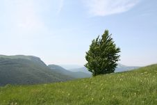Free Alone Tree Royalty Free Stock Photo - 6126225