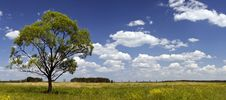Free Tree On A Grassland Royalty Free Stock Images - 6126989