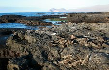 Free Galapagos Scenery Stock Photo - 6128920