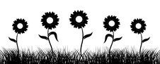 Free Sunflower On Field, Black Silhouette Royalty Free Stock Photography - 6128937