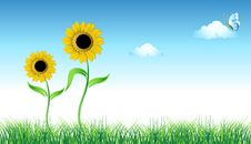 Free Sunflower On Green Field Royalty Free Stock Photography - 6128947