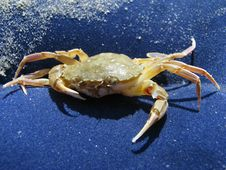 Free Crab On Rest Stock Images - 6129104
