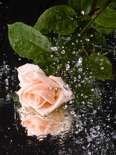 Free Pink Rose With Water Drops Royalty Free Stock Photos - 6129648