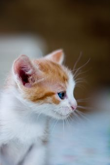 Free Kitty Stock Images - 6129674