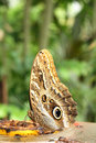 Free Butterfly Royalty Free Stock Photos - 6135948
