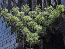 Free City Trees Stock Image - 6130081