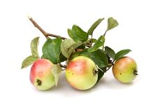 Free Fresh Apple Stock Photography - 6130102