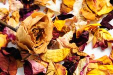 Dried Flower Petals Royalty Free Stock Image