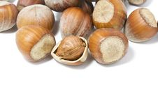 Free Hazel Nuts Royalty Free Stock Photo - 6131765