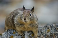 Free Curious Squirrel Royalty Free Stock Photo - 6132175