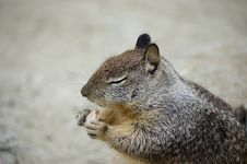 Free Squirrel Eating A Biscuit Royalty Free Stock Images - 6132199