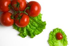 Free Tomatoes Royalty Free Stock Photos - 6133098