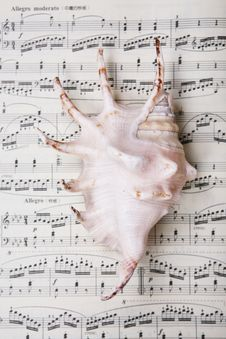 Shell On Music Music Score Book Stock Images