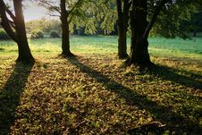 Free Shadows In Forest Royalty Free Stock Photos - 6133458