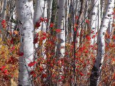 Autumn Splender Stock Images