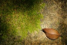 Free Leaf And Sunlight Royalty Free Stock Image - 6134466