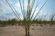 Free Sea Dune Grass Royalty Free Stock Photo - 6134795