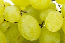 Free Wet Grapes Royalty Free Stock Photography - 6134907