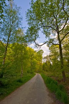 Free Forest Road Stock Photo - 6135820