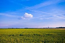 Free Rural Scene Royalty Free Stock Photo - 6135905