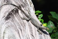Free A Lizard At A Tree Royalty Free Stock Photo - 6136185