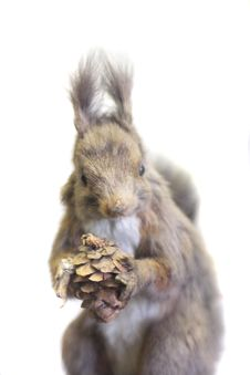 Free Squirrel Stock Photos - 6136203