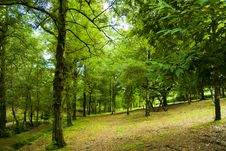 Free Forest I Stock Photos - 6137203
