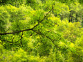 Free Green On Green Stock Image - 6146311