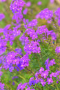 Free Purple Flowers Royalty Free Stock Images - 6149739