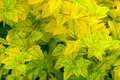 Free Yellow Leaves Royalty Free Stock Photos - 6149978