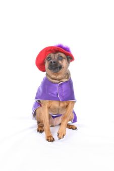Dog In Silly Costume Stock Image