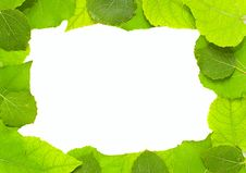 Free Leaves Frame Royalty Free Stock Photography - 6142177