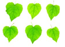 Leaves Isolated Royalty Free Stock Images