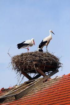 Free Storks-nest Royalty Free Stock Image - 6142466