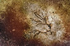 Plant On Dry Ground Royalty Free Stock Images