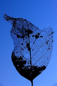 Free Skeleton Leaf Stock Photography - 6143462