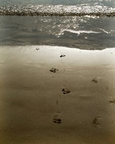 Free Sandy Footprints Royalty Free Stock Photos - 6144388