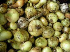 Free Onion&Garlic Stock Photo - 6144470