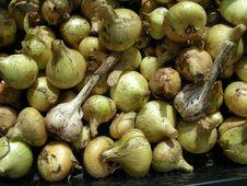 Free Onion&Garlic Royalty Free Stock Photo - 6144495