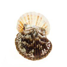 Free Seashells Stock Images - 6144704
