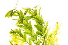 Free Plant Royalty Free Stock Image - 6145166